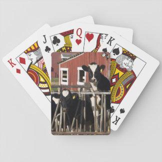 Holsteins at Boggy Meadow Farm in Walpole, New Playing Cards