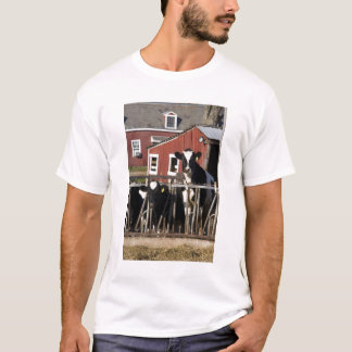 Holsteins at Boggy Meadow Farm in Walpole, New T-Shirt