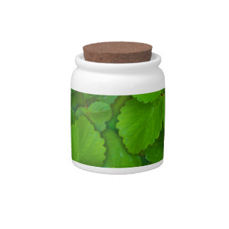Holy Basil Tulsi Green Mint Leaves Candy Jar