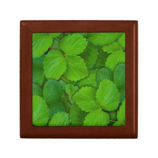 Holy Basil Tulsi Green Mint Leaves Jewelry Box