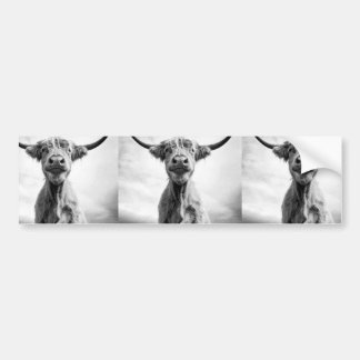 Holy Cow Mesotint Style Art Photography Car Bumper Sticker