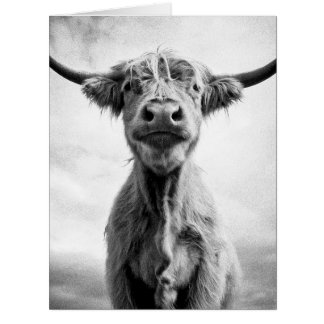 Holy Cow Mesotint Style Art Photography Card