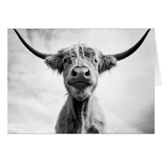 Holy Cow Mesotint Style Art Photography L Card