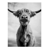 Holy Cow Mesotint Style Art Photography Poster