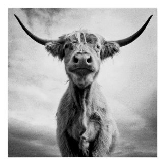 ¡Holy Cow! Póster