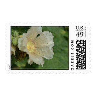Holyhock blanco sellos