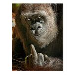 Hombre alto del gorila postal