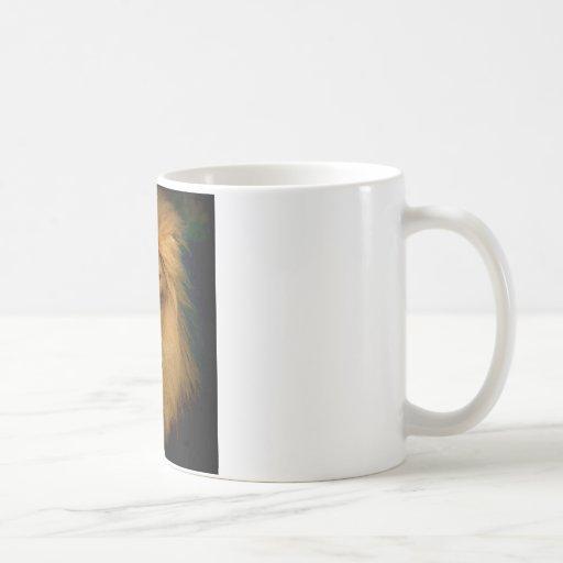 Hombre de la melena tazas de café