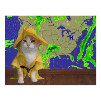 Hombre del tiempo divertido del gato/del gatito en tarjetas postales