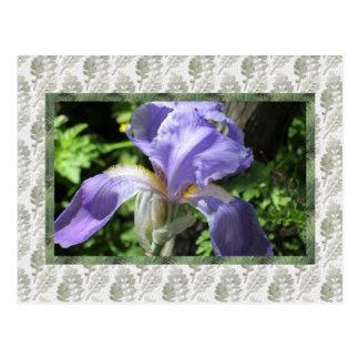 Home and Garden ~ Blue Iris Postcard