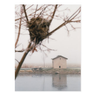 Home Bird's Nest Postcard