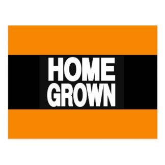 Home Grown 2 Orange Postcard