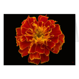 Home Grown Marigold Greeting Cards
