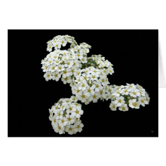 Home Grown White Floral Greeting Cards