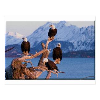 Home run Alaska de Eagles calvo Tarjetas Postales