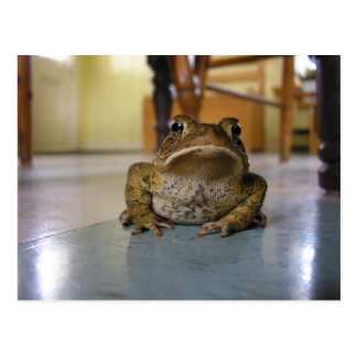 Home toad postcard