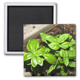 Homegrown Basil 2 Inch Square Magnet