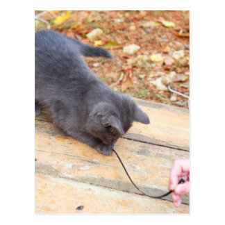 Homeless kitten playing with a stick postcard