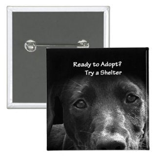 homeless pet adoption button dog