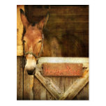 Homer the Mule Postcards