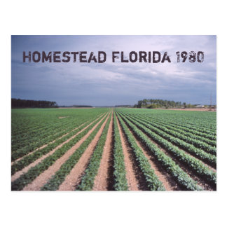 Homestead Florida 1980 Postcard