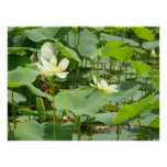 Homestead Pond Posters