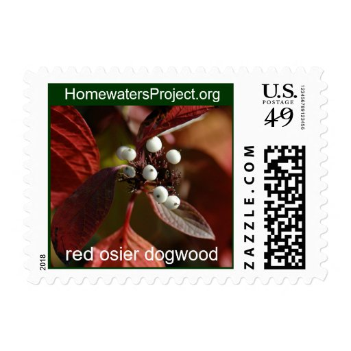 Homewaters Project red osier dogwood Stamps