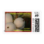 Homewaters Project Snowberry Stamps
