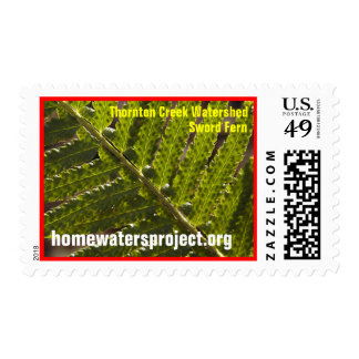 Homewaters Project Sword Fern Stamp