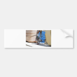 Homing Pigeon Bumper Stickers