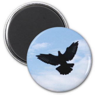 Homing Pigeon Coming Home Magnet