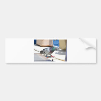 Homing Pigeon On A Yacht Bumper Sticker