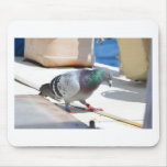 Homing Pigeon On A Yacht Mouse Mats