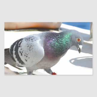 Homing Pigeon On A Yacht Rectangular Stickers