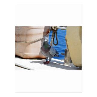 Homing Pigeon Postcard