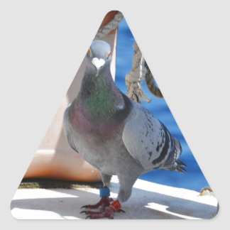 Homing Pigeon Triangle Sticker