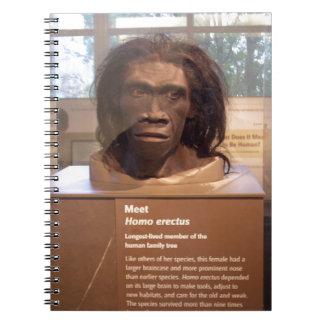 Homo erectus; objeto expuesto del museo libreta