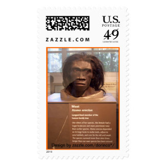 Homo erectus; objeto expuesto del museo sello