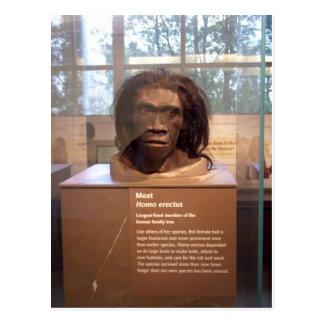 Homo erectus; objeto expuesto del museo postales