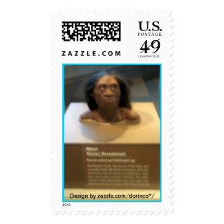 Homo floresiensis; museum exhibit stamp