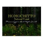 Homochitto National Forest - Mississippi postcard
