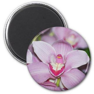 Honduran Orchids Fridge Magnet