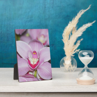 Honduran Orchids Display Plaque