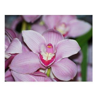 Honduran Orchids Postcard