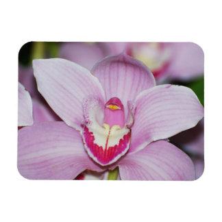 Honduran Orchids Rectangular Magnet