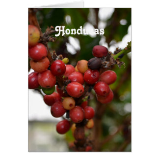 Honduras Coffee Beans Card