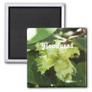 Honduras Hazelnuts Refrigerator Magnets