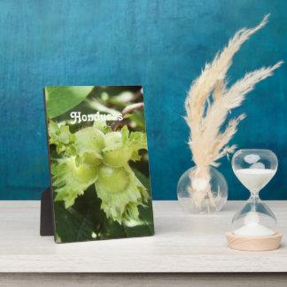 Honduras Hazelnuts Display Plaque