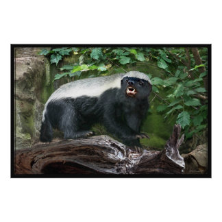 Honey Badger Poster -60x40 -other sizes available