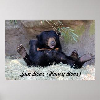 Honey Bear (Sun Bear) Photo Poster